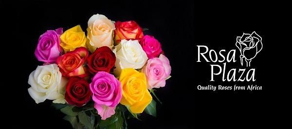 Afbeeldingsresultaat voor rosa plaza